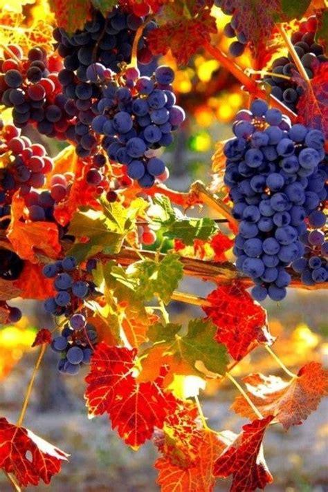 autumn harvest stunning colors to explore pinterest