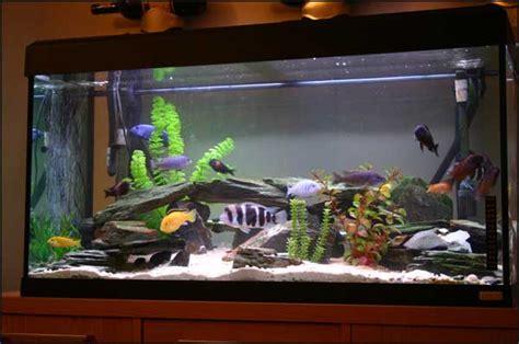 Aquarium Inrichting Ideeen by Aquarium Inrichten Stappen Plan Voor De Inrichting