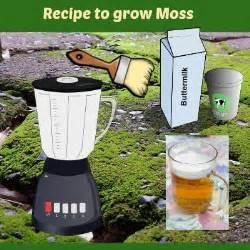 how to grow moss on your hypertufa pots the hypertufa