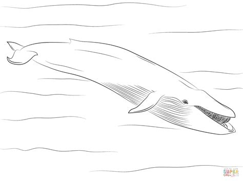 blue whale coloring page free printable coloring pages