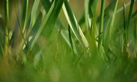 Pilze Im Rasen Anzeichen by Ein Sch 246 Ner Rasen Ohne Unkraut So Wird 180 S Gemacht