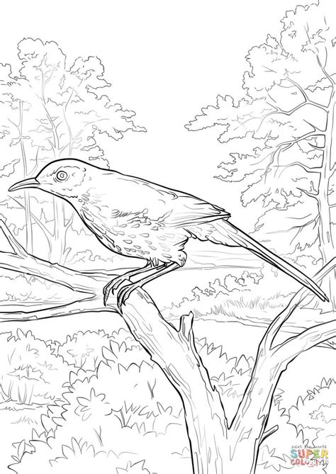 brown thrasher coloring page free printable coloring pages