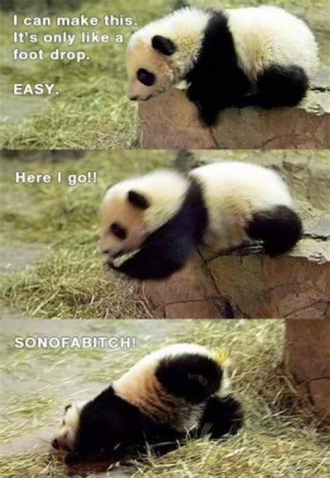 animals cute funny panda image 183876 on favim com