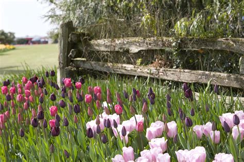 spring landscaping sandra story march 2015