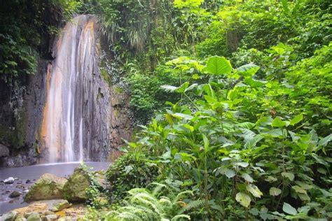 diamond falls botanical gardens reviews  news travel