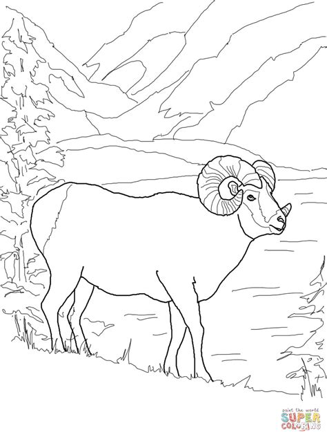 mountain sheep coloring page argali mountain sheep coloring page free printable