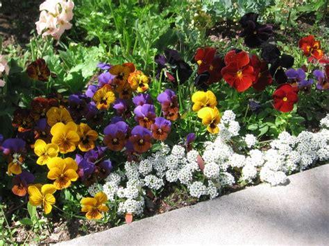 Pansy Garden Ideas 73 Best Images About My Favorite Flowers On Pinterest Fresh Flower Arrangement Trumpet