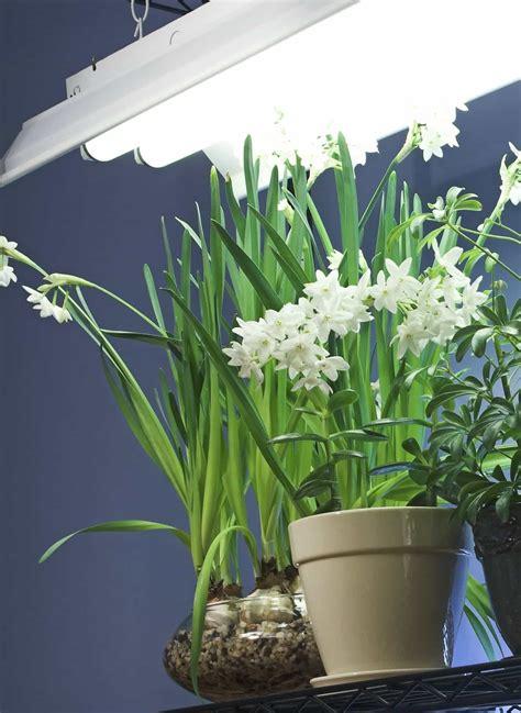 fluorescent lighting  indoor plants grow lighting