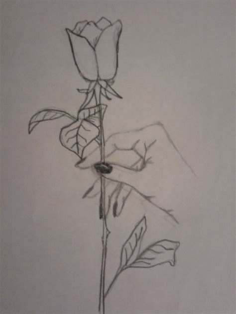 Winner Drawing Software holding a rose by sonia parisa on deviantart