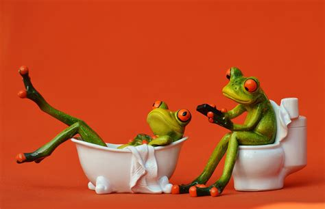 frog in bathtub free images sweet cute swim green toilet frog
