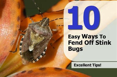 10 easy ways to fend stink bugs tips ideas