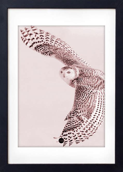 Owl Limited powder owl limited edition poster