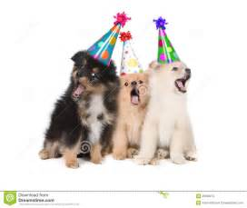 puppies singing happy birthday wearing party hats stock