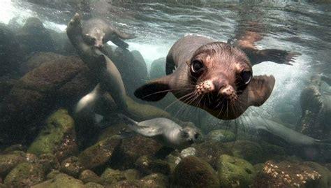 fotos das ilhas galapagos  aumentar sua vontade de