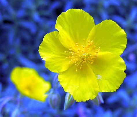 i fiori di bach funzionano come funzionano i fiori di bach e gli usi naturopataonline