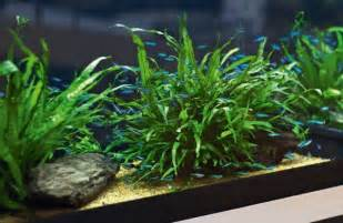 best low light aquarium plants low tech planted tank quoteko com planted aquarium pinterest