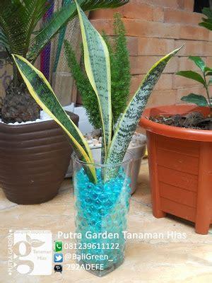 Murah Gel Pendingin Ruangan Alami putra garden sekilas tentang media tanaman hias hidrogel