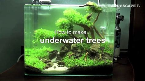 how to make aquascape aquascaping how to make trees in planted aquarium youtube