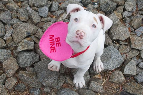marshmello dog video marshmallow ca adopted deaf dogs rock