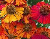 high heat plants 25 high heat flowers for hot summer areas no wilting