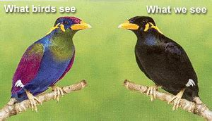 uv light for birds archive birds comparative physiology of vision