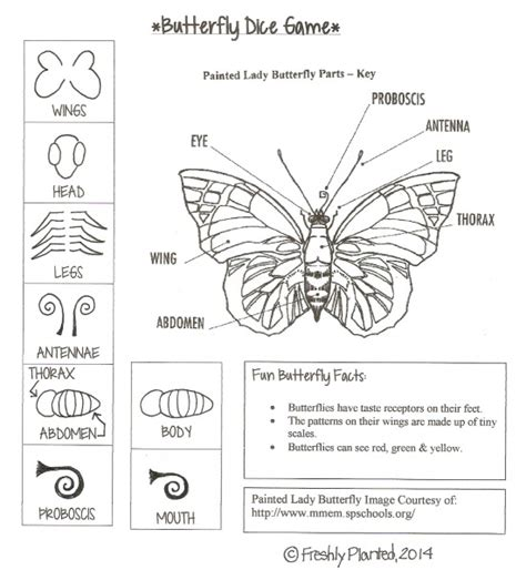 parts of a butterfly printable dice butterfly facts