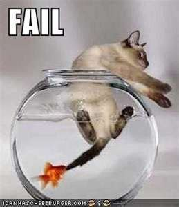 epic cat table image search results for funny animal sayings awesome