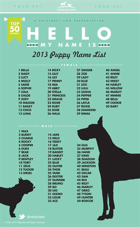 names for dogs finding the best names for dogs chasing tales