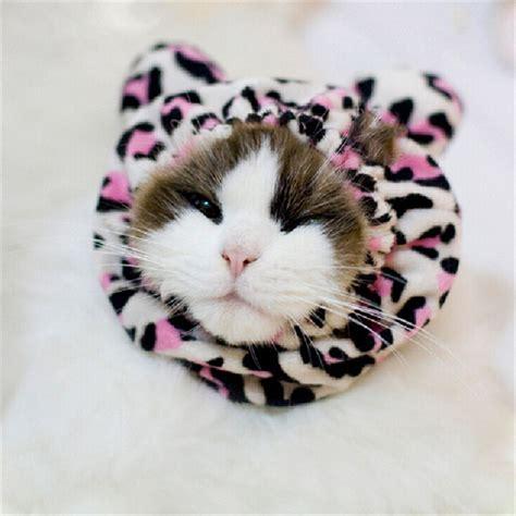 Cutest Cats Pet Pet Pet Product 7 by Leopard Print Ears Pet Products Hat Caps Pet