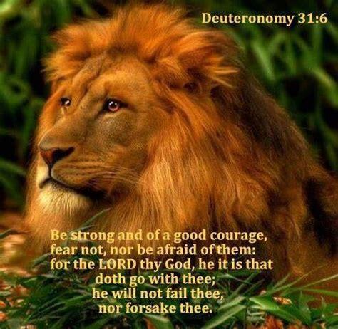 lion  judah bible verses pinterest lion  judah  lion