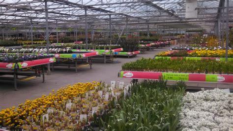 echter lorbeer kaufen 410 pflanzenshoppen in nl venlo diese rombergs