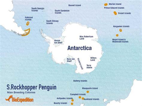 where do penguins live map rockhopper penguin habitat map www imgkid the