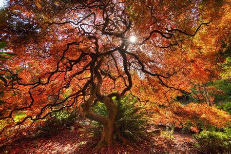 bc fall colours  ontario heather  jones photography