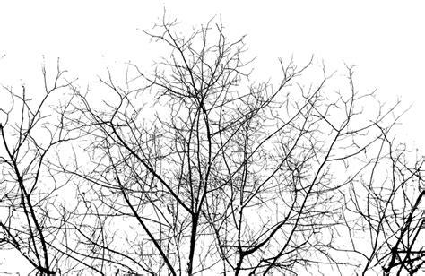 tree pattern png hausdorff dimenson analysis