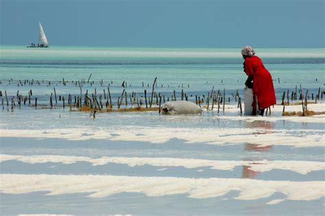 turisti per caso zanzibar la raccolta delle alghe a paje zanzibar viaggi