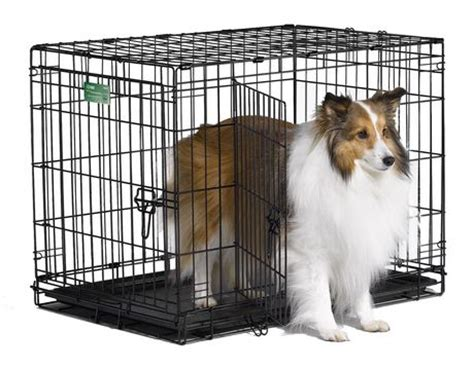 puppy cages at walmart 30 quot icrate cage 2 door walmart ca