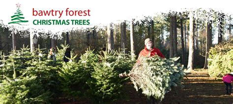 100 christmas tree farm nottingham alpine