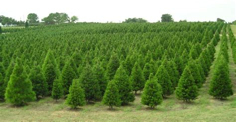 cut own tree michigan where to cut your own tree near free in