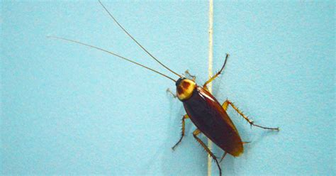 household bugs  rid  bed bugs
