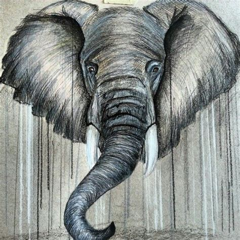 elephant drawing drawings pinterest elephants