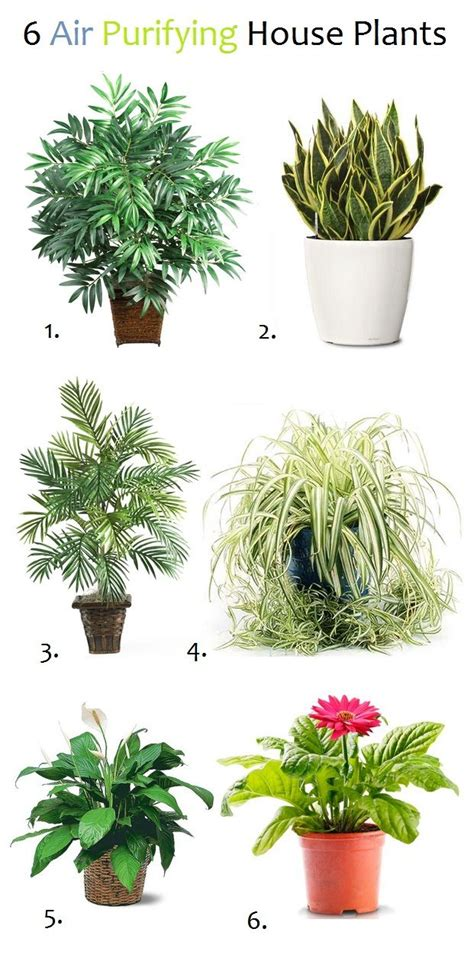 air purifying plants  dont    true