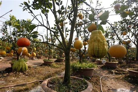 5 fruit tree kinhbac