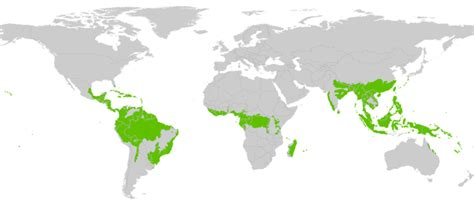 rainforest map location of rainforests worldwide tropical rainforest locations worldwide elsavadorla