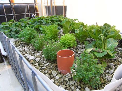 aquaponics grow bed what is aquaponics ecoponics