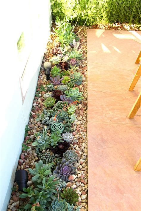 gardening with succulents tips inspiration