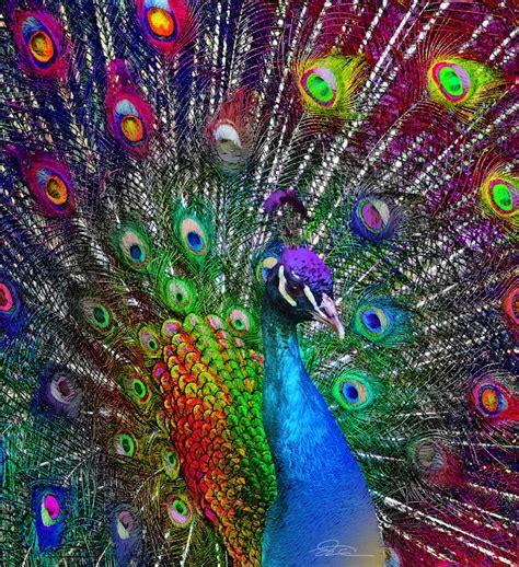 peacock feather colors funmozar peacock home decor peacocks