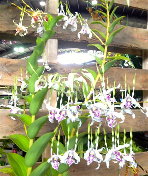 a symphony of orchids sandra wagner wright