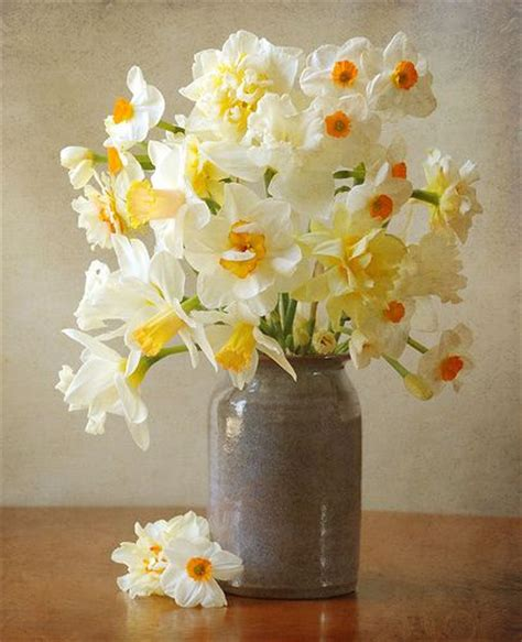 Ideas For Daffodil Varieties Design Tabulous Design Daffodil Floral Arrangements