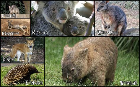 8 Animals From Australia Id To See by March 2014 Rich With