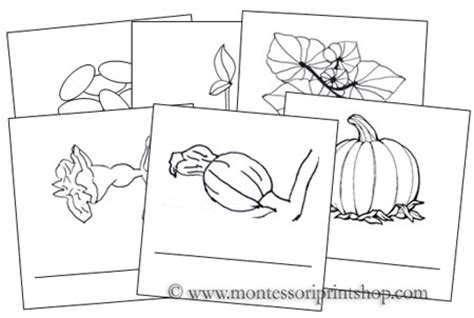 life cycle of a pumpkin coloring page plant life cycle coloring pages pumpkin coloring pages